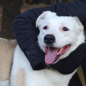 Милка - Найденные собаки