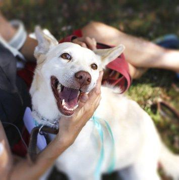 Белла - Собаки в добрые руки