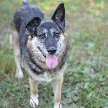 Олеся - Собаки в добрые руки