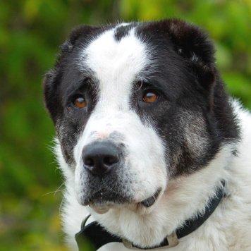 Тагай - Собаки в добрые руки