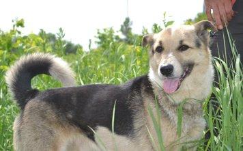 Люсек - Собаки в добрые руки