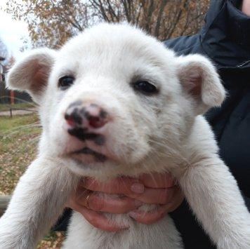 Маленькие щенки - Найденные собаки