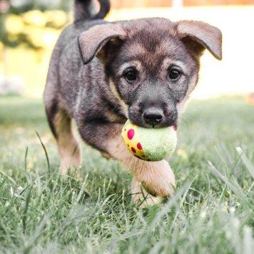 щенули - Собаки в добрые руки