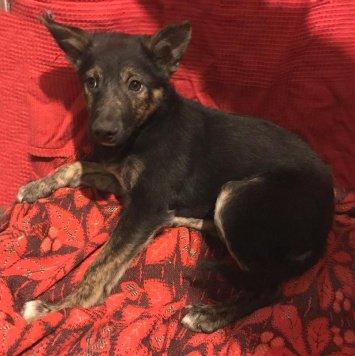Плюшевый щенок Баксик - Собаки в добрые руки