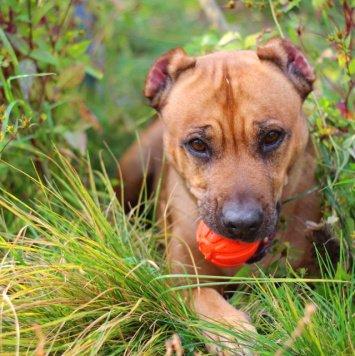 Кинза - Собаки в добрые руки
