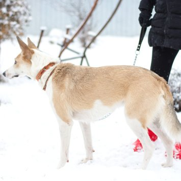 Грейси - Собаки в добрые руки