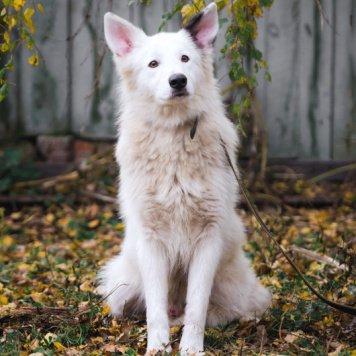 Степан - Собаки в добрые руки