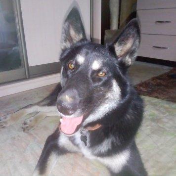 Альма - Найденные собаки