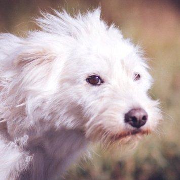 Поля - Собаки в добрые руки