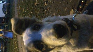 Соня - Найденные собаки