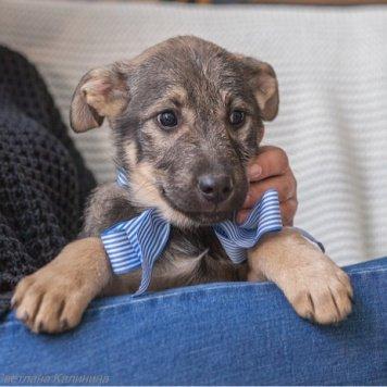Бейли - Собаки в добрые руки