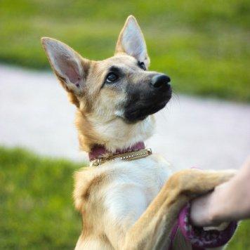 Бежа - Собаки в добрые руки