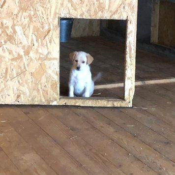 Щенки маленькой собачки - Собаки в добрые руки