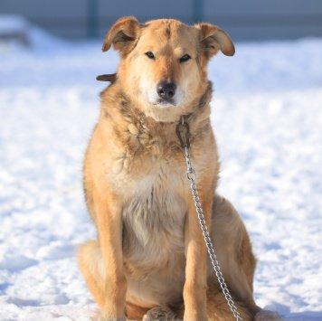 Саша - Собаки в добрые руки