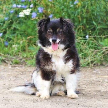 Сальвина - Собаки в добрые руки