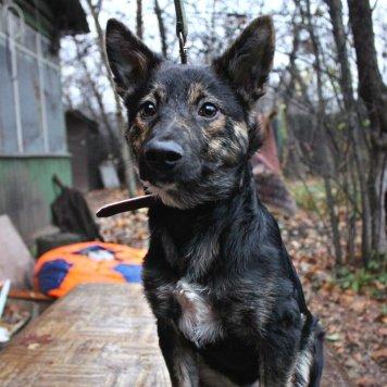 Джеки с красивыми ушами - Собаки в добрые руки