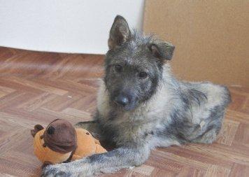 Даня - Собаки в добрые руки