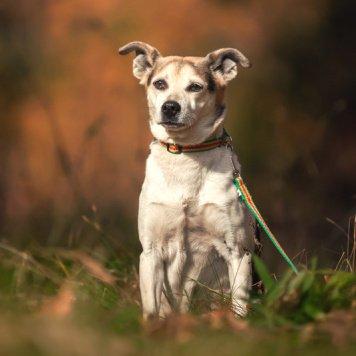 Жуля - Найденные собаки