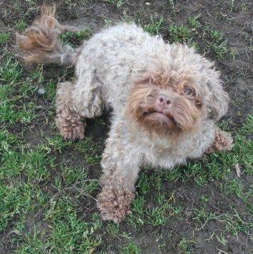 Касьян - Собаки в добрые руки