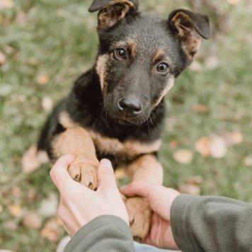 Теодор - Собаки в добрые руки