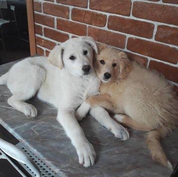 Умка и Лэсси - Собаки в добрые руки