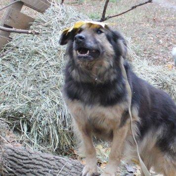 Дося - Собаки в добрые руки