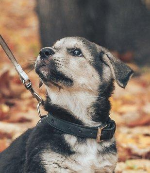 Роузи - Собаки в добрые руки