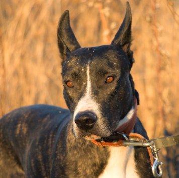 Киприда - Собаки в добрые руки
