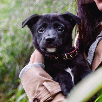 Красотка Луночка - Собаки в добрые руки