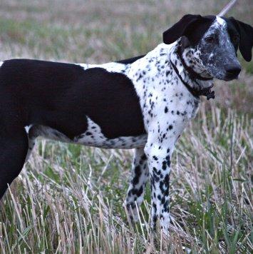 Бом - Собаки в добрые руки