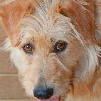 Одуванчик - Собаки в добрые руки