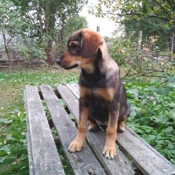 Изюминка (Зюма) - Собаки в добрые руки