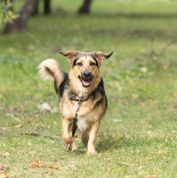 Лизаветта - Собаки в добрые руки