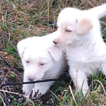 Пока без имени - Собаки в добрые руки