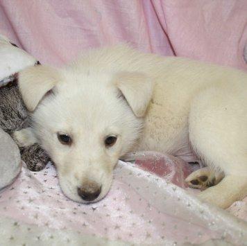 Лайчата - Собаки в добрые руки