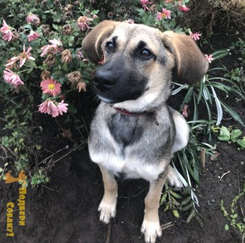 Дуся - Найденные собаки