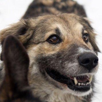 Лисонька - Собаки в добрые руки