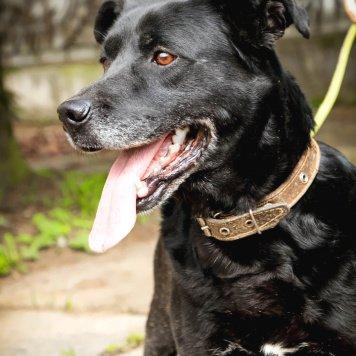 Черный Рэкс - Собаки в добрые руки