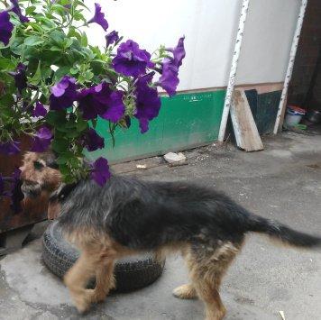 Рекс - Пропавшие собаки