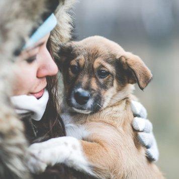 Щеночек мальчик - Собаки в добрые руки