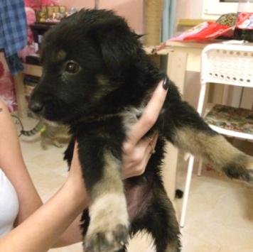 Бобик - Найденные собаки