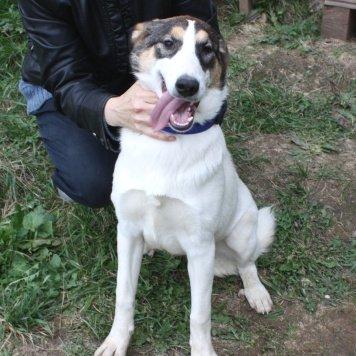 Жасмин - Собаки в добрые руки