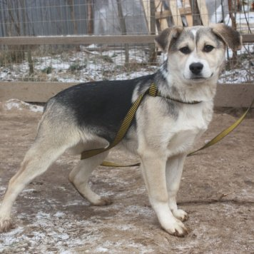 Пиона - Собаки в добрые руки