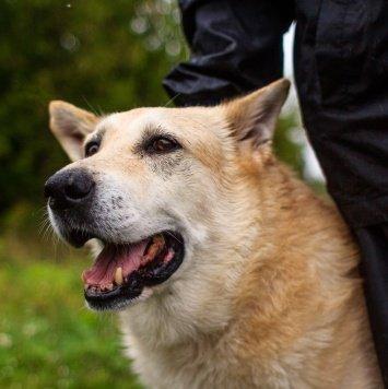 Батон (Батя) - Собаки в добрые руки