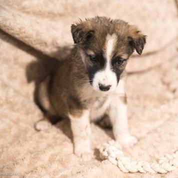 Щенята Зорге - Собаки в добрые руки