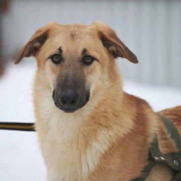 Джампер - Собаки в добрые руки