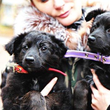 Вишня - Собаки в добрые руки