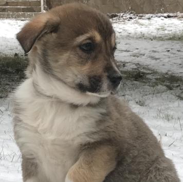 Милиса - Собаки в добрые руки
