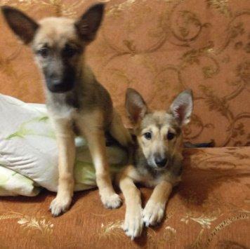 Айва и Альфа - Собаки в добрые руки