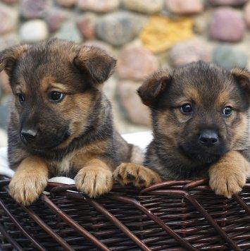 Тюпа и Тяпа - Собаки в добрые руки